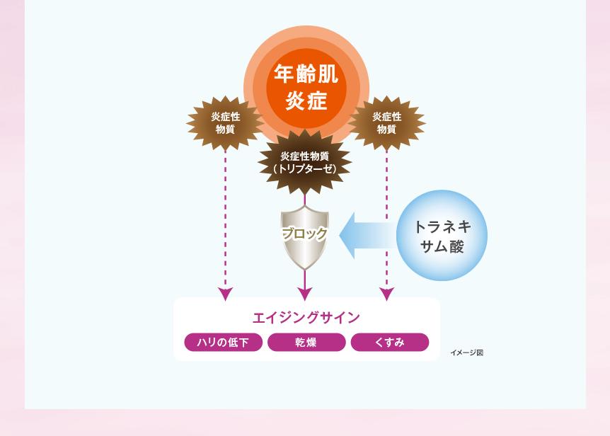 年齢肌炎症 炎症性物質(トリプターゼ) 炎症性物質 ブロック トラネキサム酸 エイジングサイン ハリの低下 乾燥 くすみ イメージ図